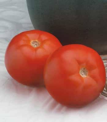tomate_ebia_f1